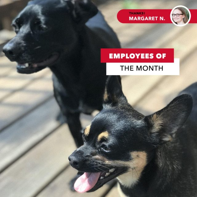 What do you do when your coworkers drool on your desk, demand extra treats, and repeatedly ask to go on break? For Winnie and Xander here, Margaret awards them each employee of the month, obviously.   Tag us in a picture or story of your pets, er.. coworkers 😉 and Louie will choose the best ones to join Louie's Study Buddies. #MaryvilleOnline
