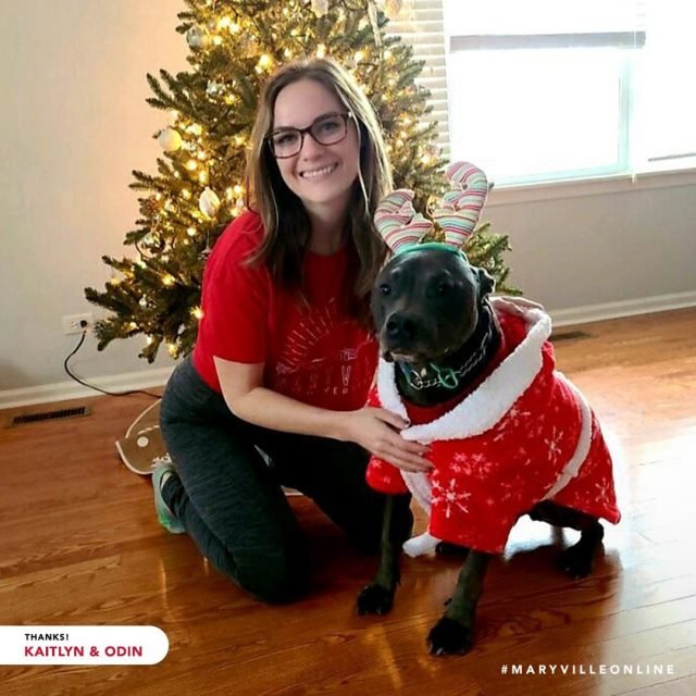 Meet Odin! He's a good boy who enjoys sweaters, snacks, and snuggles—just like Louie, our St. Bernard mascot.   Thank you for spreading holiday cheer with us, Kaitlyn T. Good luck earning your Master of Arts in Strategic Communication and Leadership!   #maryvilleonline #maryvilleuniversity #maryvilleu #happyholidays #merrychristmas #holidaycheer #dogsofinstagram #christmasdogs